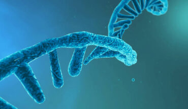 RNA Targeted Therapeutics
